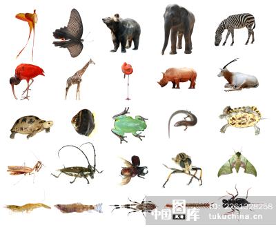 多种动物图片拼在一起