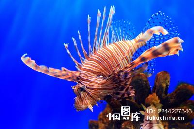 壁纸 动物 海底 海底世界 海洋馆 水族馆 鱼 鱼类 400_267